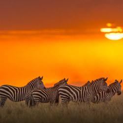 Tequila Sunset-Zhayynn James-finalist-wildlife-5727