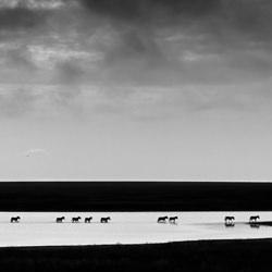 Zebra Crossing-Zhayynn James-finalist-wildlife-5728