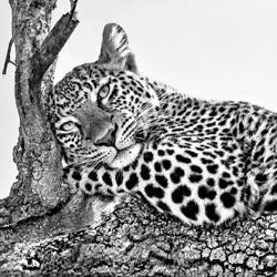 Time to rest-Xavier Ortega-silver-wildlife-5835
