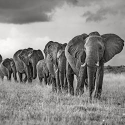 The Land Of The Giants-Xavier Ortega-finalist-wildlife-5786