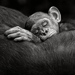 Sleeping infant-Xavier Ortega-gold-wildlife-5814