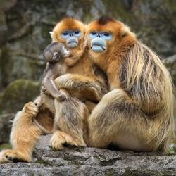 Happy Days - Love You Too, Daddy !-Karin De Winter-bronze-wildlife-5668