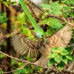 The second of survival.-Sira Leepipatnavit-bronze-wildlife-5706