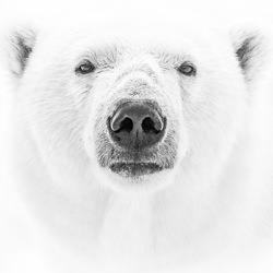 White On White-Jo Van Rossem-bronze-wildlife-5673