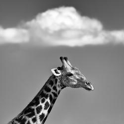 I Have A Dream-Jo Van Rossem-bronze-wildlife-5675