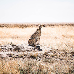 The throne-Silvia Rodriguez Gonzalez-finalist-wildlife-5731