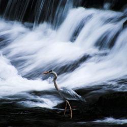 Walk on water-Silvia Rodriguez Gonzalez-finalist-wildlife-5732