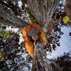 The World Is Going Upside Down-Thomas Vijayan-gold-wildlife-5807