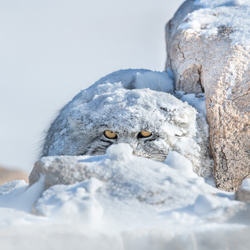Peek A Boo-Thomas Vijayan-finalist-wildlife-5734