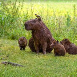 Age before Beauty-Marcel Strelow-finalist-wildlife-5790