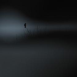 Land of Darkness-Piotr Gorny-finalist-wildlife-5798