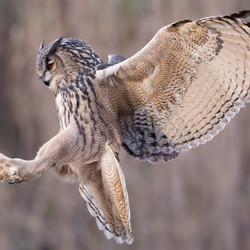 Landing-Frank Jacobs-bronze-wildlife-5699