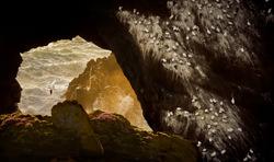 Gannets-Petr Bambousek-gold-wildlife-5816