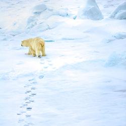The path less trodden-Harry Skeggs-bronze-wildlife-5672