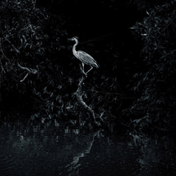 heron-William Chua-bronze-wildlife-5690