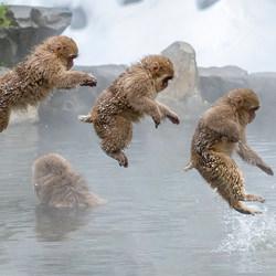 Monkey Jump Sequence-Ramesh Letchmanan-bronze-wildlife-5708