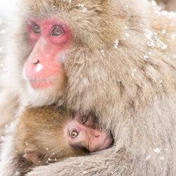 Mother love-Kousuke Kitajima-finalist-wildlife-5802