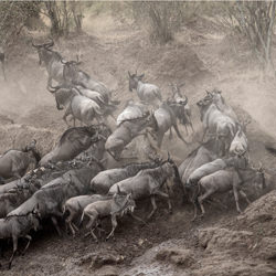 Migration Chaos-Andy Lerner-finalist-wildlife-5739