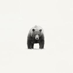 Power-Andy Lerner-bronze-wildlife-5671