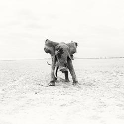O.G.-Andy Lerner-finalist-wildlife-5740