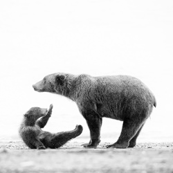 Mother And Child-Andy Lerner-gold-wildlife-5808