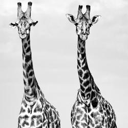 Two Sisters-Robert Heath-finalist-wildlife-5803