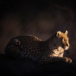 Alert-Robert Heath-finalist-wildlife-5805