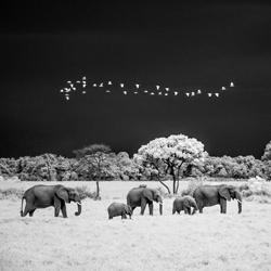 Elephants under stormy sky, Masai Mara, Kenya-Paolo Ameli-finalist-wildlife-5771