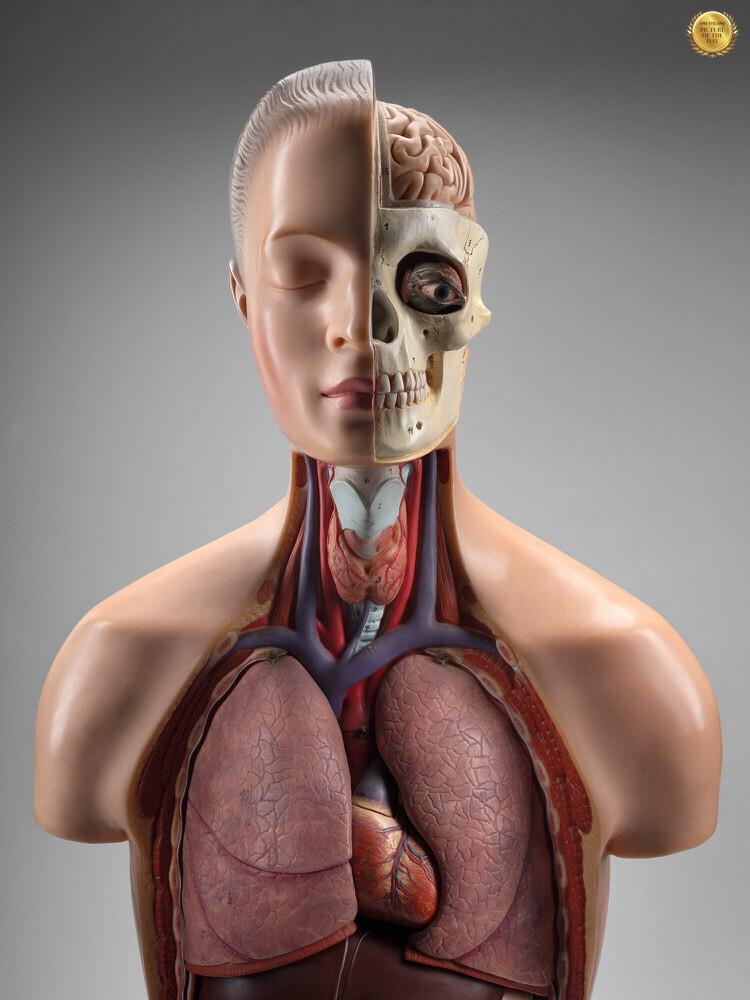 Photograph Nick Nacca Medical Mannequin 01 on One Eyeland