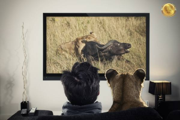 Photograph Ozkan Ozmen Lioness And Watching Documentary on One Eyeland