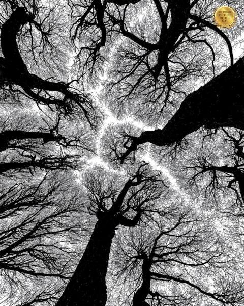 Photograph Petri Damsten Reaching For The Sky on One Eyeland