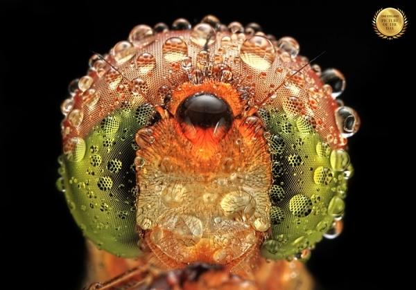 Photograph Shikhei Goh Dragonfly on One Eyeland