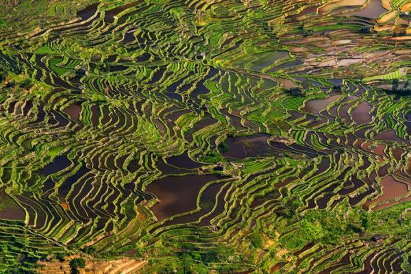 Photograph Thierry Bornier Yuanyang  Rice Field Terrace on One Eyeland